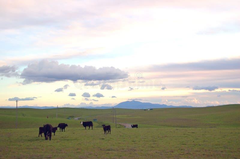 Het platteland van de lente stock afbeelding