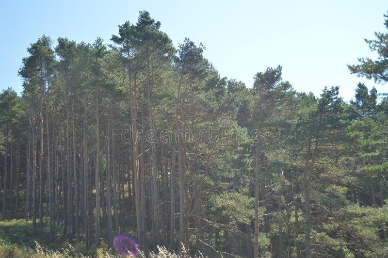 Het Platteland van eucalyptusforest at sunset in the van Galicië Aard, Landschappen, Plantkunde, Reis 2 augustus, 2015 Rebedul, L royalty-vrije stock afbeelding