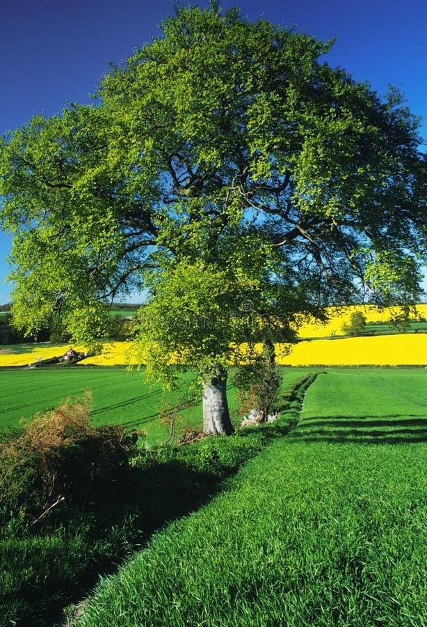 Het platteland van gewassen stock afbeeldingen