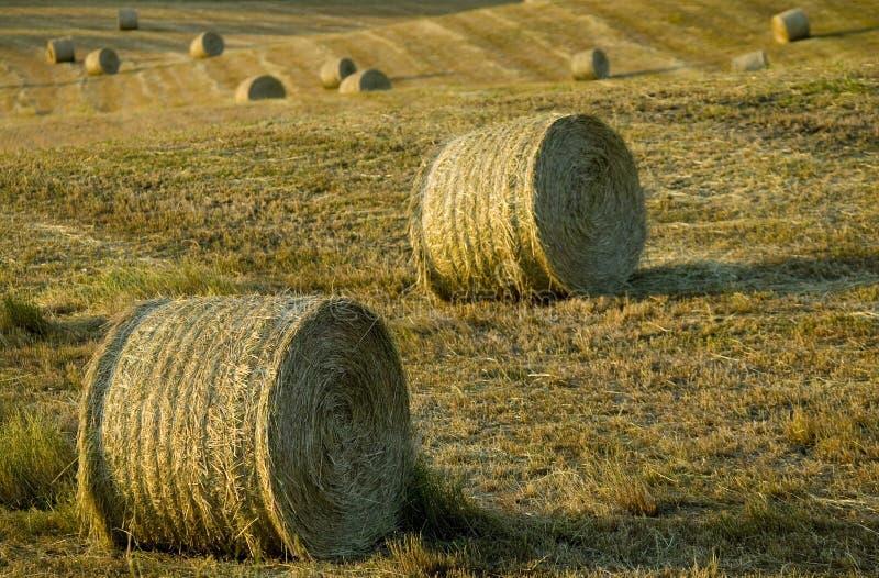 Het platteland van Toscanië, hooi-ballen op de weide stock afbeelding
