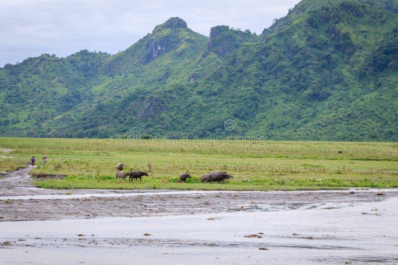 Het plattelandslandschap van Filippijnen stock afbeeldingen