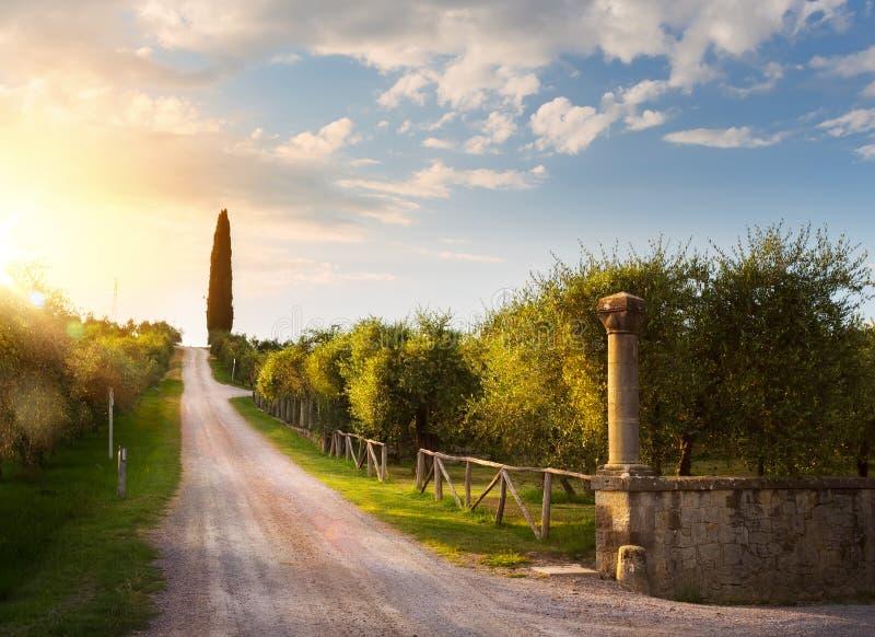 Het plattelandslandschap van Italië met landweg en oude olijf orch stock foto's