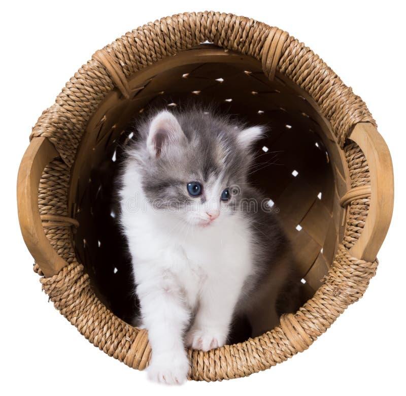 Het pluizige katje krijgt uit de geïsoleerde mand stock foto