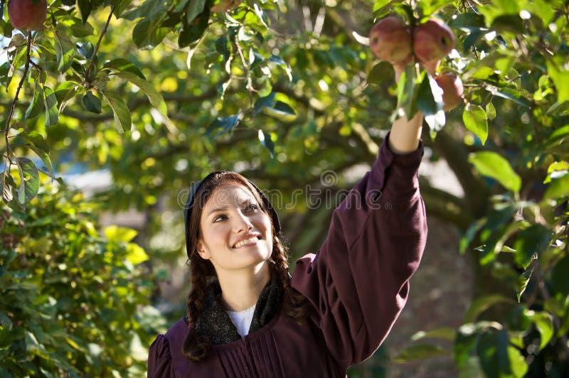 Het plukken appelen royalty-vrije stock afbeelding