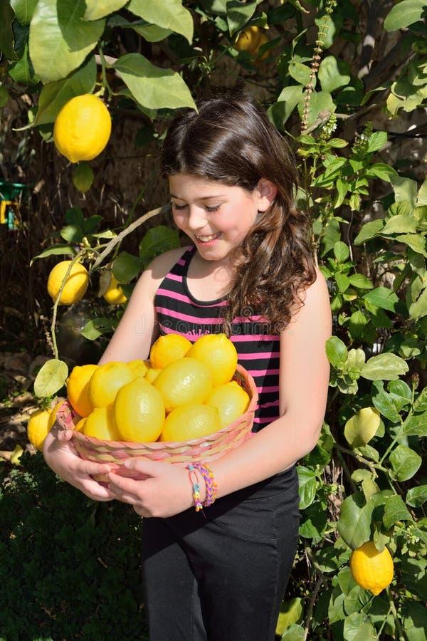 Het plukken citroenen royalty-vrije stock foto