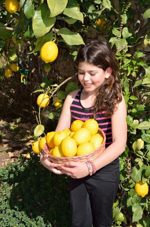 Het plukken citroenen royalty-vrije stock foto's