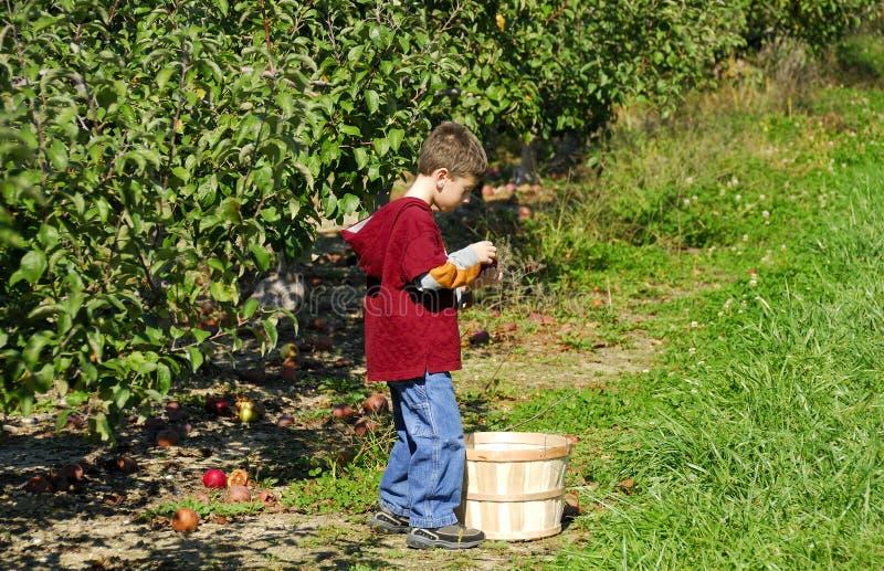 Het Plukken van de appel stock afbeelding
