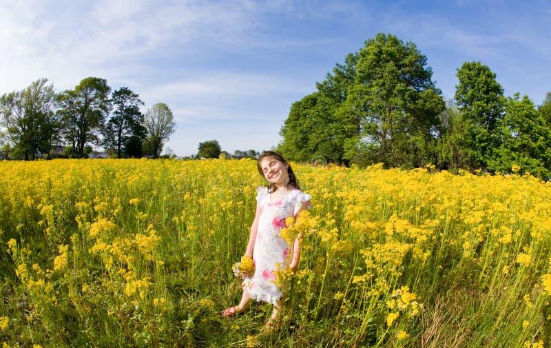 Het Plukken van het meisje Bloemen stock fotografie
