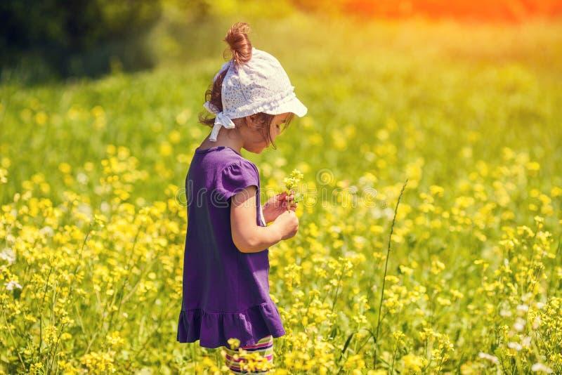 Het plukken van het meisje bloemen stock foto's