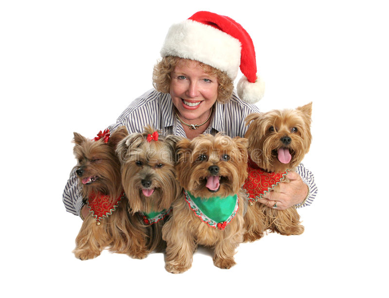 Download Het Portret Van De Familie Van Yorkie Van Kerstmis Stock Afbeeldingen - Afbeelding: 1238454
