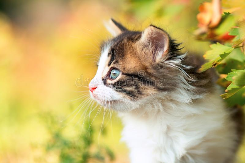 Het portret van het de herfstprofiel van een leuk klein pluizig katje die op een boomtak beklimmen in de aard royalty-vrije stock afbeeldingen