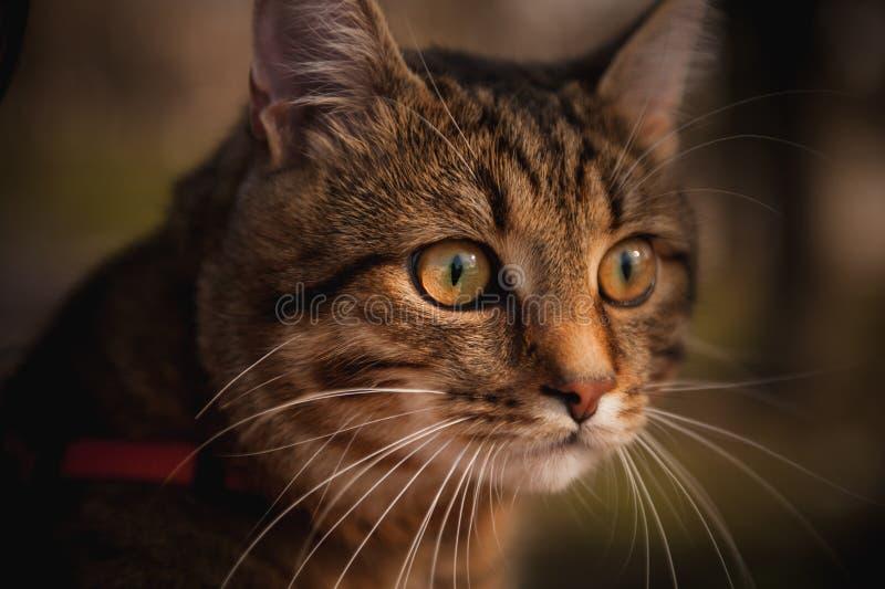 Het portret van de huiskat op vage achtergrond stock foto's