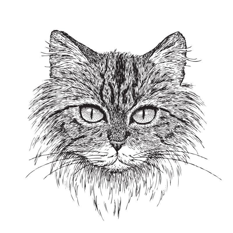 Het Portret van de Kat van de gestreepte kat vector illustratie