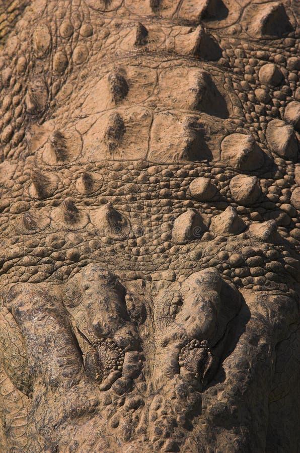 Het portret van de krokodil royalty-vrije stock afbeeldingen