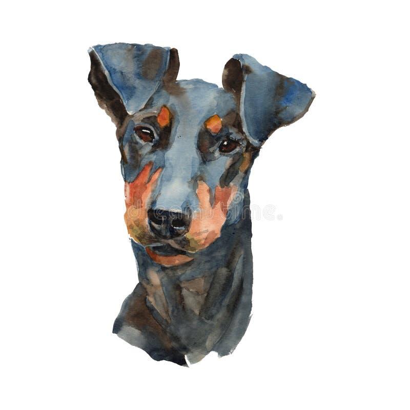 Het portret van de de terriërhond van Manchester stock illustratie