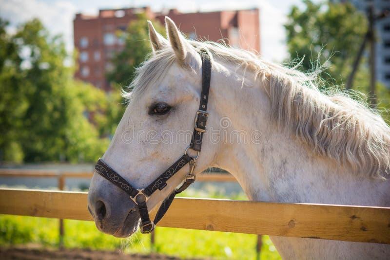 Het portret van het de zomerpaard royalty-vrije stock afbeelding