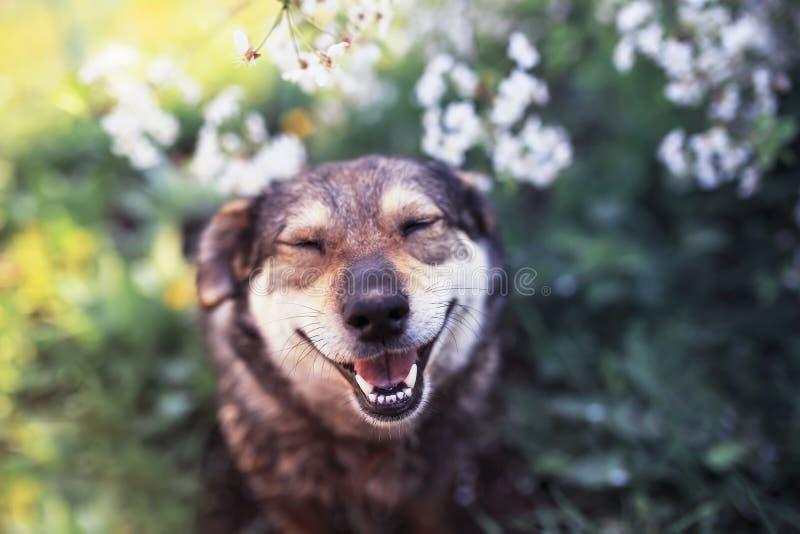 Het portret van een hondzitting op een achtergrond van bloeiende struiken in de duidelijke lente kan tuinieren en glimlachend met royalty-vrije stock foto's