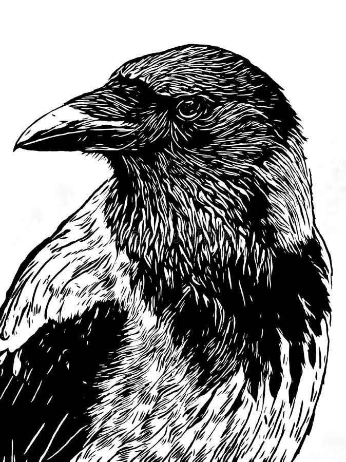 Het portret van een kraai met hoofd draaide het kijken in zwart-witte I royalty-vrije illustratie