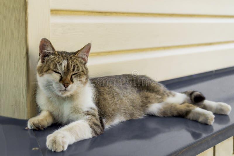 Het portret van een mooie drie-gekleurde jonge vrouwelijke kat ligt thuis op een metaalluifel en ontspant met gesloten ogen stock foto