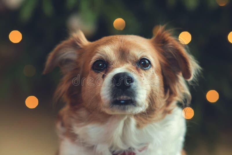 Het portret van Gelukkige bruine leuke hond, leidt schot van glimlachhond met bokehachtergrond stock foto