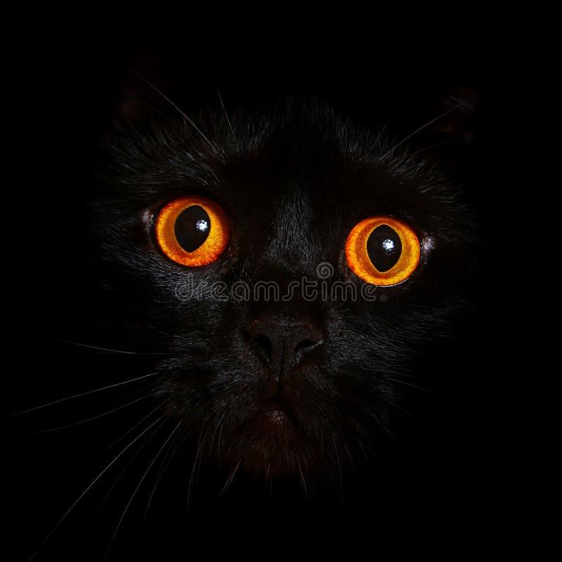 Het portret van het close-up van zwarte kat met oranje ogen royalty-vrije stock afbeeldingen
