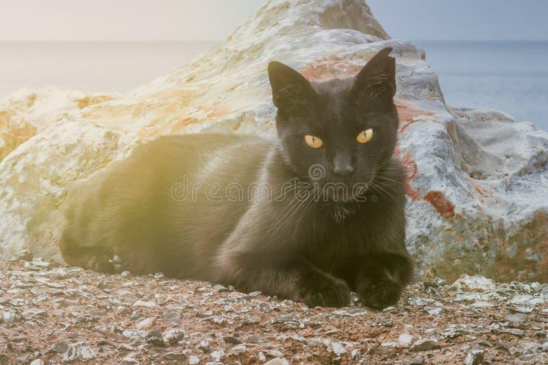 Het portret van het close-up van zwarte kat met oranje ogen stock fotografie