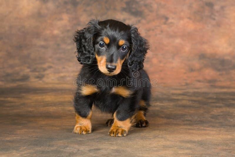 Het portret van het puppy stock afbeeldingen