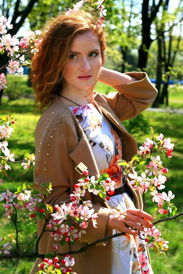 Het portret van het roodharige meisje in een elegante kleding stelt tegen de achtergrond van de tot bloei komende appelboomgaard royalty-vrije stock foto