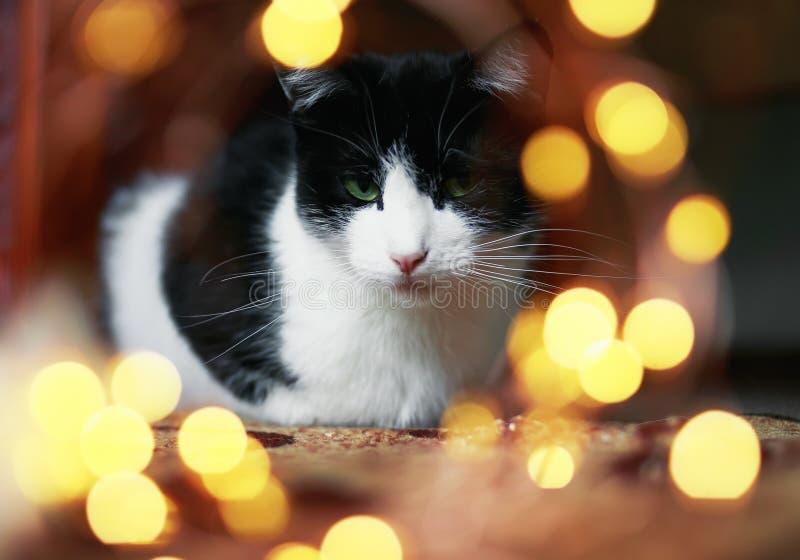 Het portret van leuke gespannen die kattenzitting op de vloer door heldere feestelijk wordt omringd schittert en cirkels van lich stock foto's