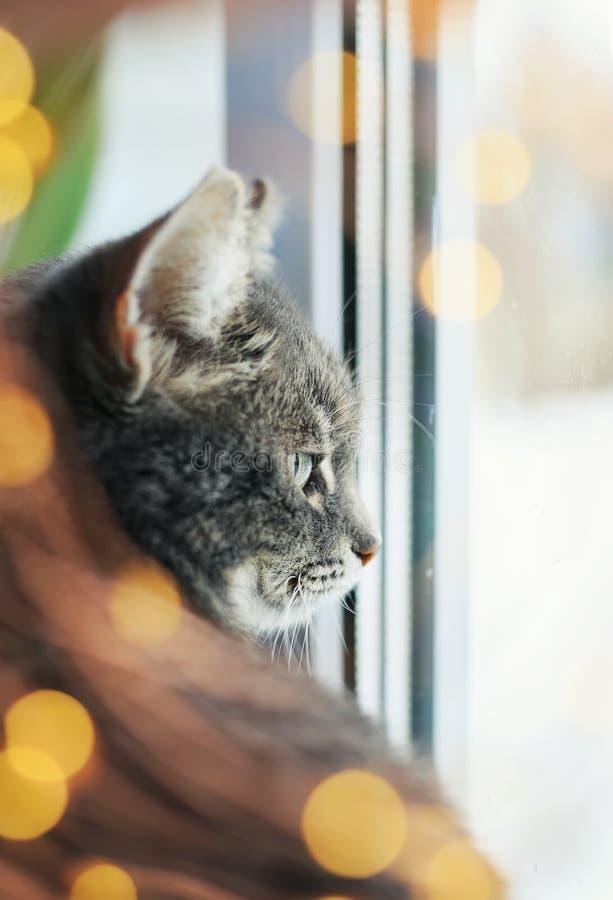 Het portret van leuke tevreden kattenzitting en het kijken uit het venster dat door heldere feestelijk wordt omringd schitteren e stock foto