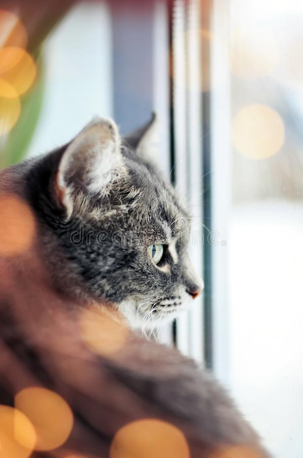 Het portret van leuke tevreden kattenzitting en het kijken uit het venster dat door heldere feestelijk wordt omringd schitteren e stock fotografie