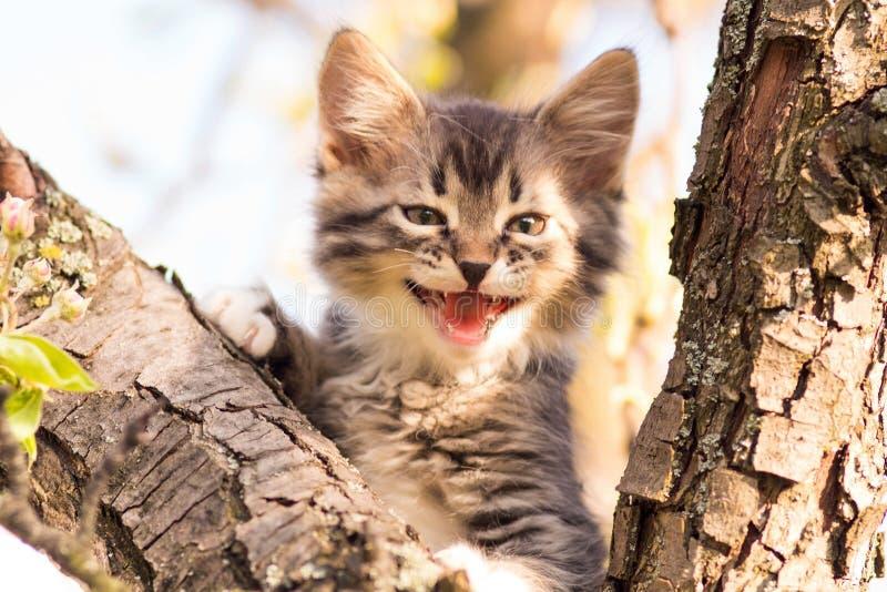 Het portret van mooi weinig katje mauwt in aard royalty-vrije stock fotografie