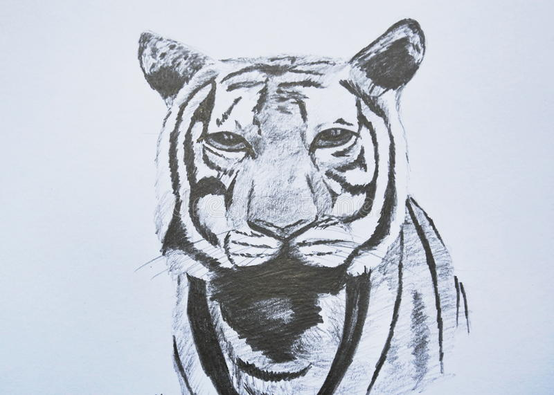 Het portretpotlood die van het tijgergezicht op papier trekken stock foto's