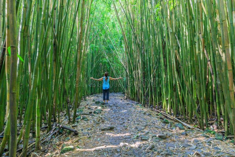 Het praktizeren Yoga in een het Bamboebos van Maui stock afbeelding