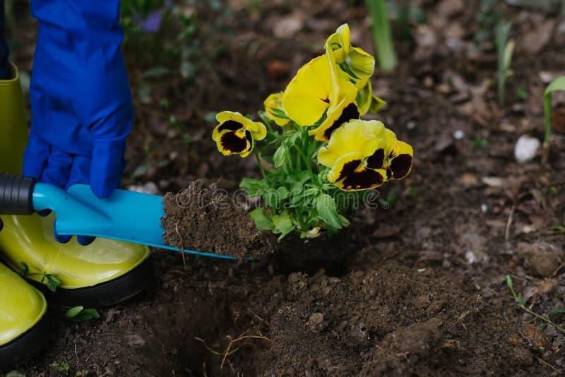 Het proces om een bloem te planten de tuinman kweekt bloemen Tuinreeks Het tuinieren concept stock foto