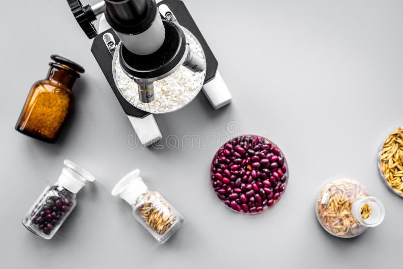 Het proces van de voedselanalyse Rijst onder microscoop, rode bonen en tarwe in petrischalen op grijze hoogste mening als achterg stock afbeelding