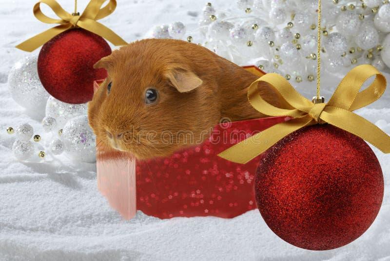 Het Proefkonijn van Kerstmis stock foto