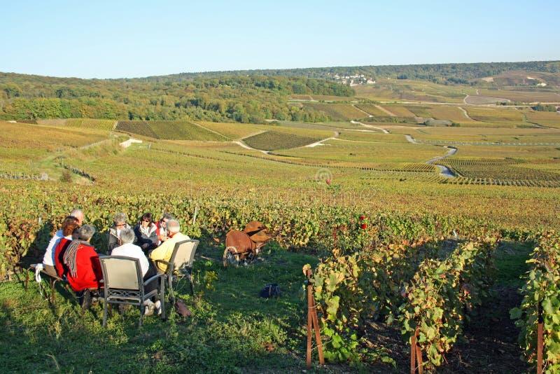 Het proeven van Champagne in de wijngaard royalty-vrije stock afbeeldingen