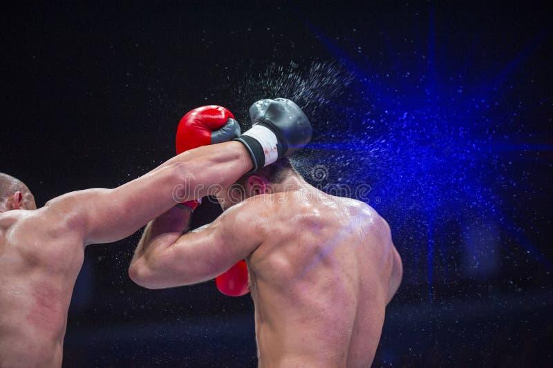 Het professionele bokser twee in dozen doen Strijdsport stock foto