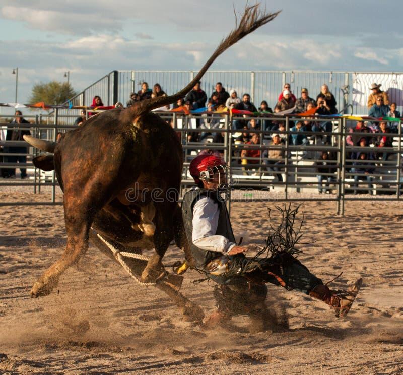 Het professionele Rodeostier Berijden stock afbeelding