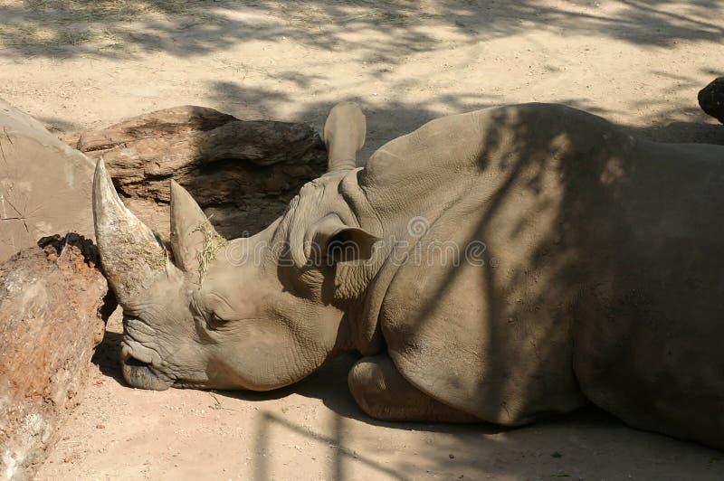 Download Het Profiel Van De Rinoceros Stock Foto - Afbeelding bestaande uit hoorn, oren: 32472