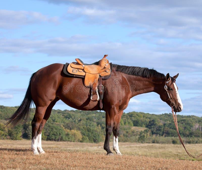 Het profiel van het paard royalty-vrije stock afbeeldingen