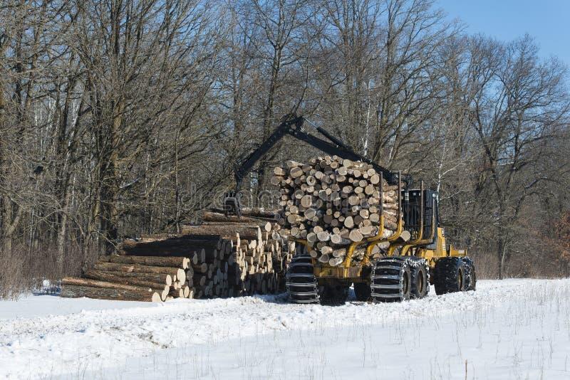 Het het programma openen van een centraal bos van Minnesota stock afbeelding