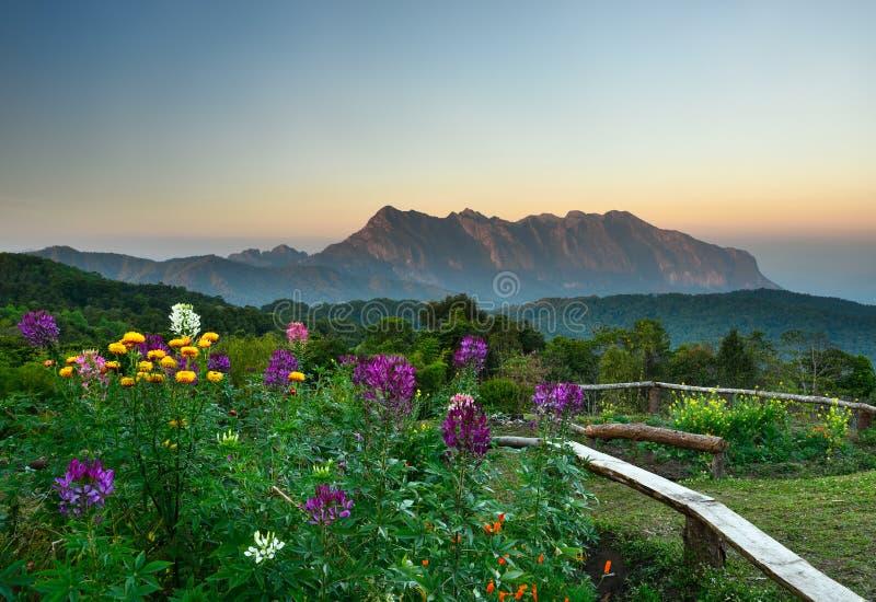 Het punt van de zonsopgangmening van de berg van Doi Mae Taman, Thailand stock foto's