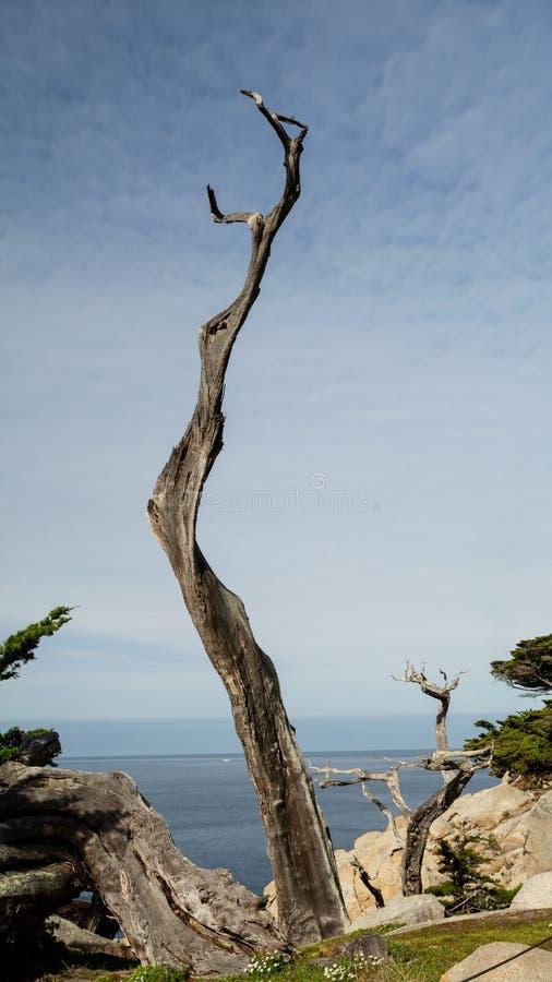 Het punt van Pescadero van de spookboom royalty-vrije stock afbeeldingen