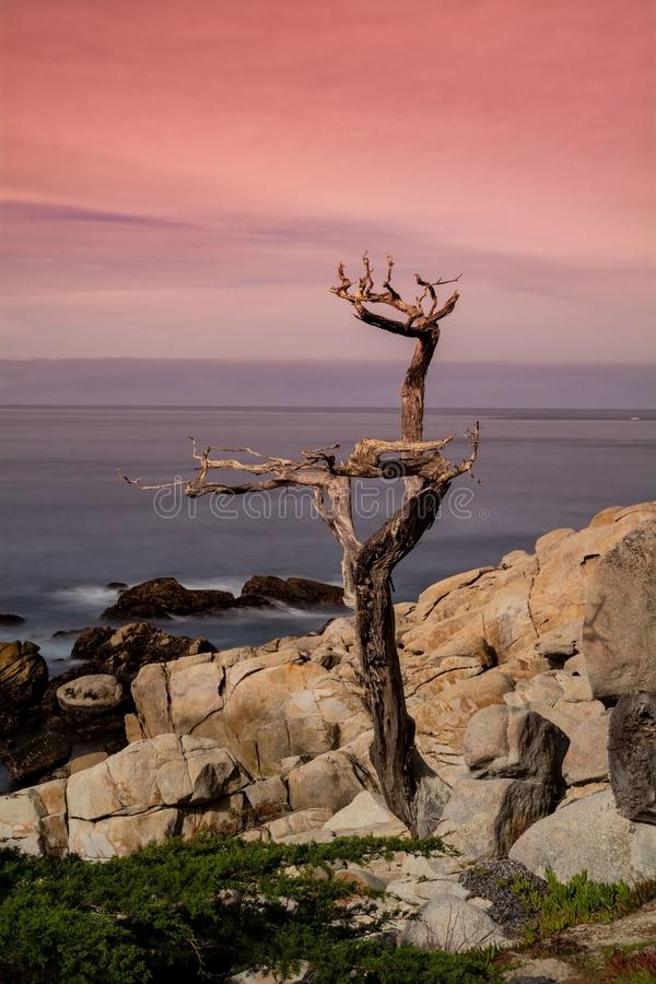 Het punt van Pescadero van de spookboom stock fotografie