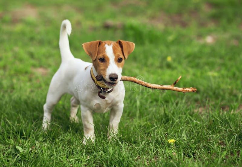 Het puppy royalty-vrije stock afbeeldingen
