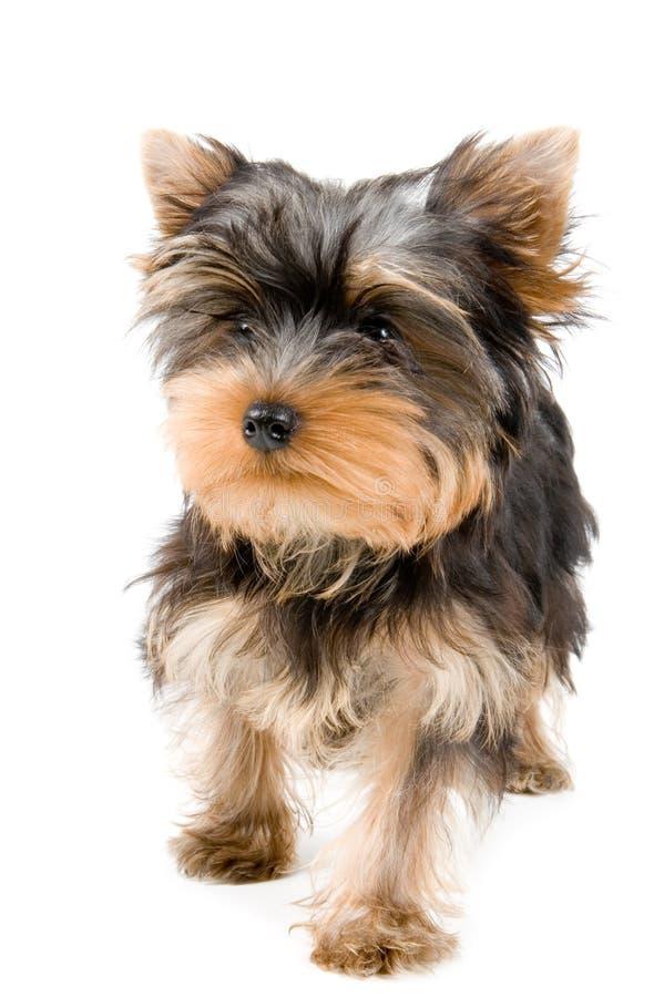 Het puppy stock foto's