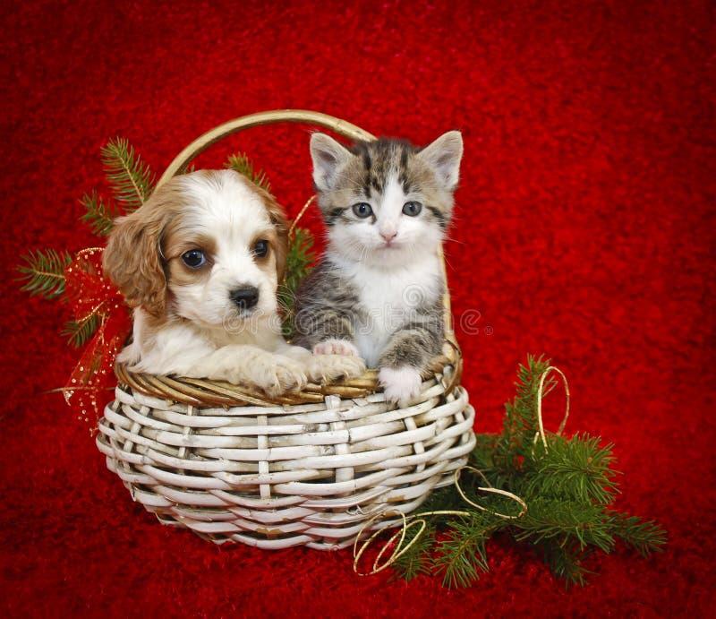 Het Puppy en het Katje van Kerstmis. royalty-vrije stock fotografie