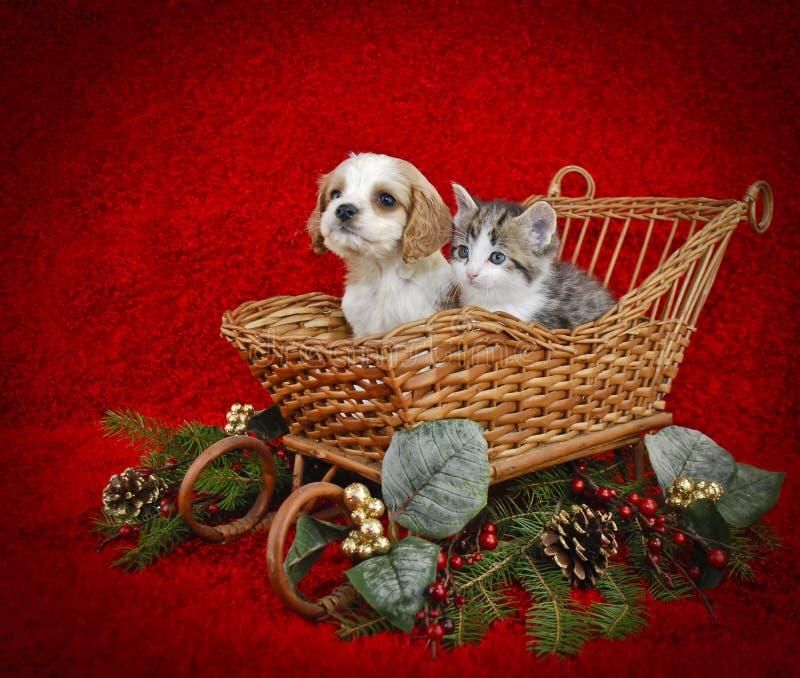 Het Puppy en het Katje van Kerstmis. stock afbeeldingen